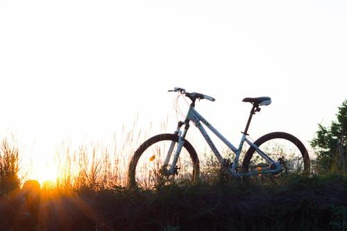 kolo v přírodě