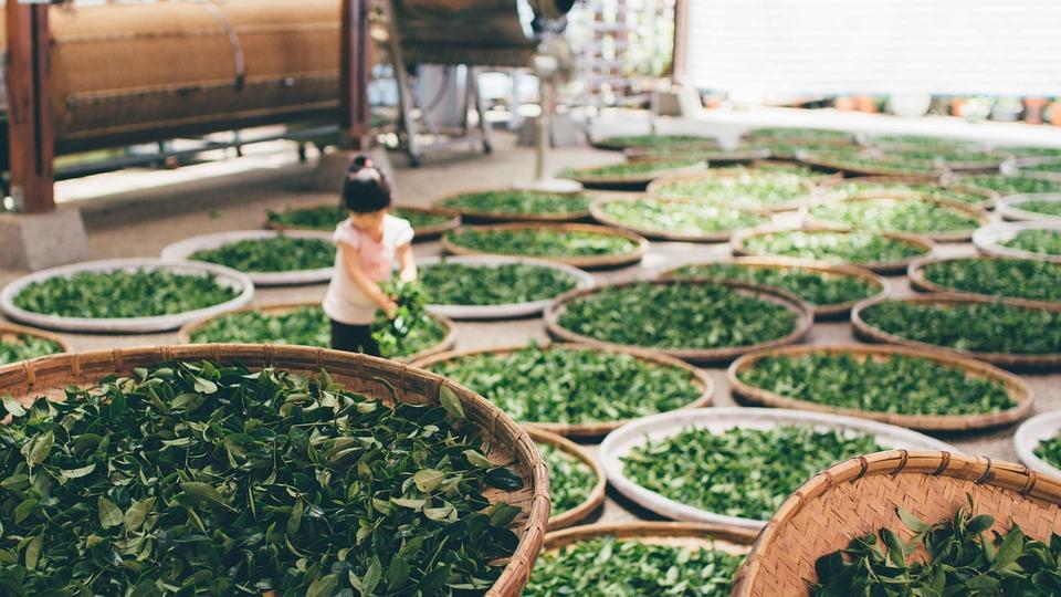 tea-863407_960_720